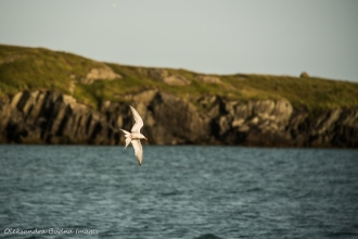 white seagull flying