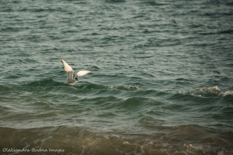 white seagull in the water
