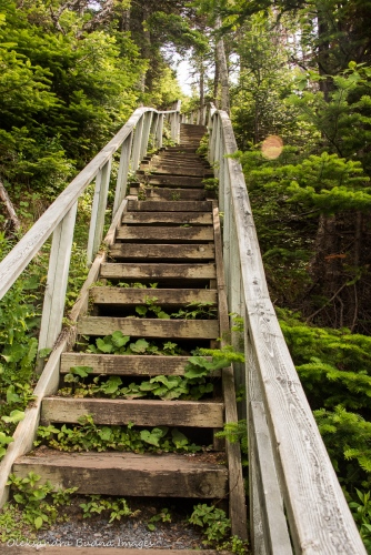 Berry Hill trail in Gros Morne Park in Newfoundland