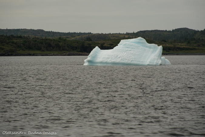 iceberg in St. Anthony in Newfoundland