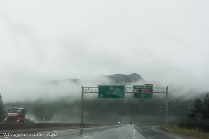 fog on the road in Newfoundland