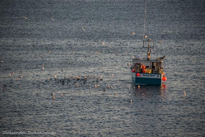 fishing boat near Cape Spear