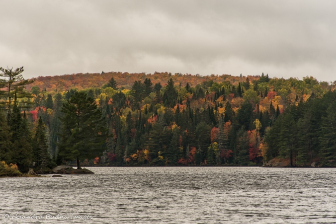 Joe Lake in Algonquin in the fall
