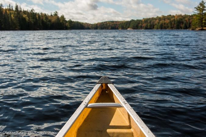 paddling on Joe Lake in Algonquin