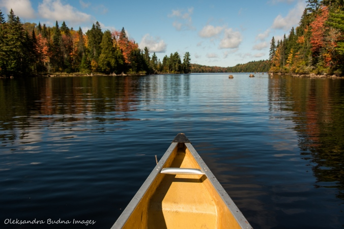paddling on Little Oxtongue River in Algonquin in the fall