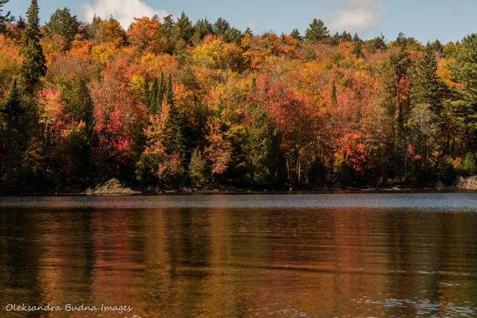 fall in Algonquin, forest reflected in the lake