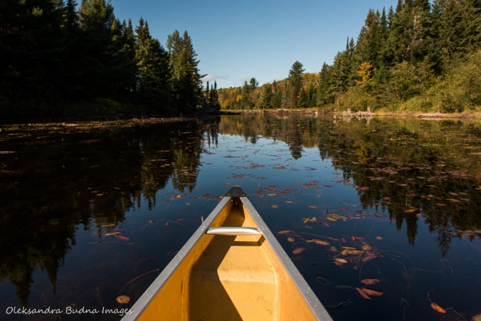 paddling on Littledoe in Algonquin
