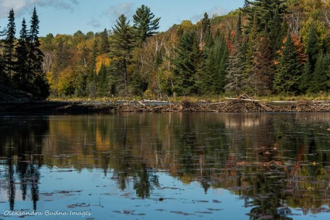 beaver dam between Littledoe and Tom Thompson lakes