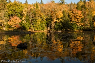 Algonquin in the fall