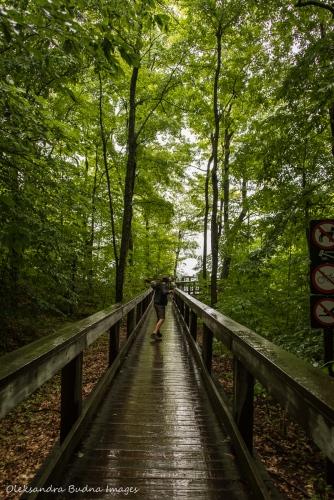 boardwalk near Pink Lake in Gatineau Park
