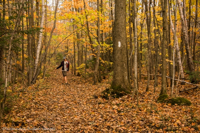 hardwood forest at Nottawasaga Bluffs conservation area