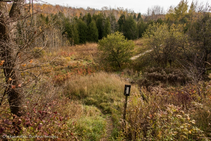 Bruce Trail at Nottawasaga Bluffs Conservation Area