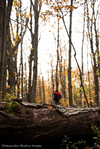 hiking Betty Carter Trail at Nottawasaga Bluffs Conservation Area