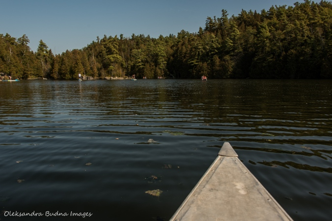 canoeing at Rockwood Conservation Area