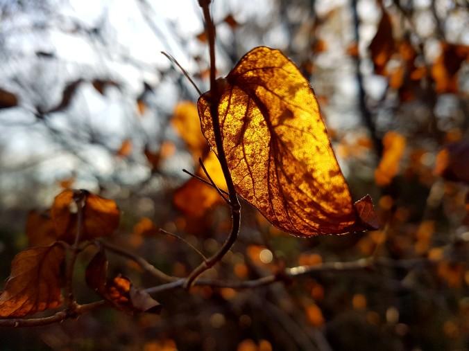light shining through a yellow leaf