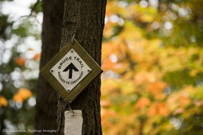 Bruce trail marker