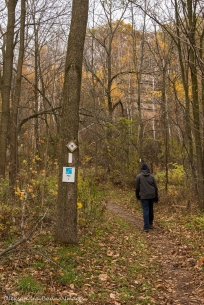 fire trail at Kelso Conservation Area