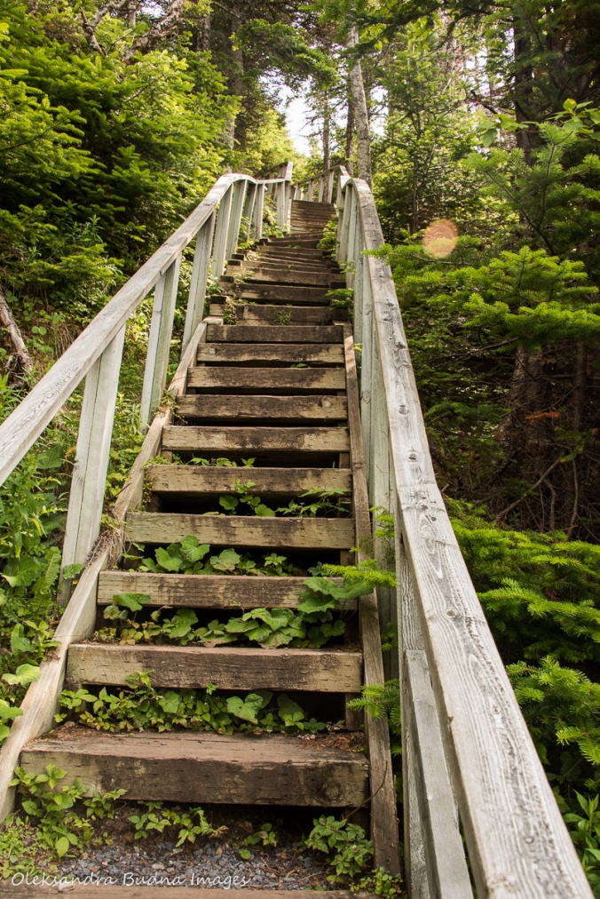 stairs on Berry Hill trail in Gros Morne park in Newfoundland