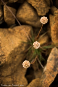 plants in the Tablelands, Gros Morne, Newfoundland