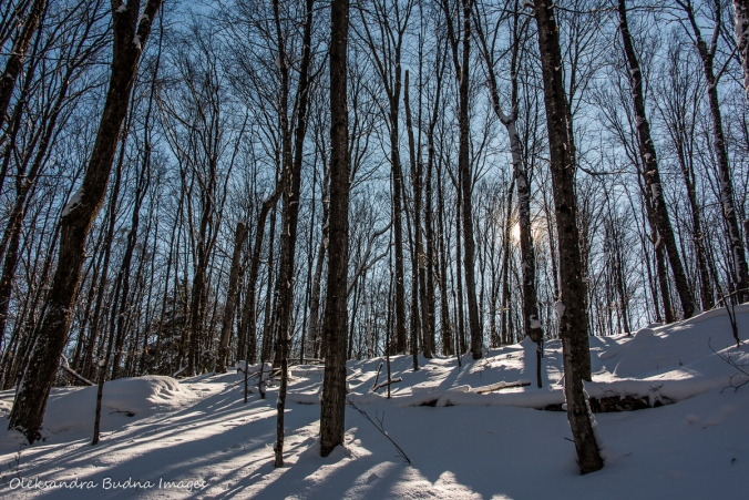 winter forest in Silent Lake Provincial Park
