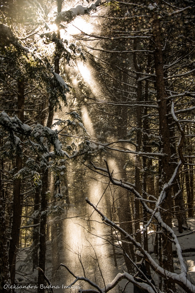 winter forest in Silent Lake PP