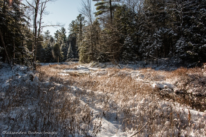 winter forest at Silent Lake Provincial Park