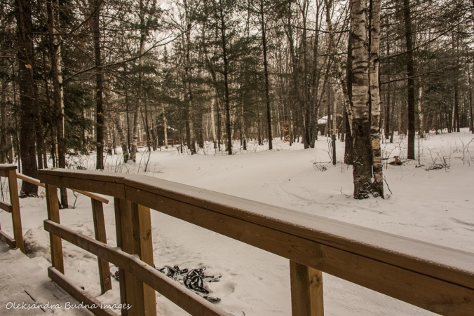 view from cabin 225 at Arrowhead provincial park in the winter