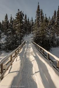 bridge at parc national d'Aiguebelle