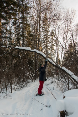 snowshoeing on La Loutre trail in Parc National d'Aiguebelle