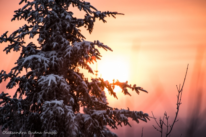 sunrise in the winter fron La Cigale rustic shelter in Parc National d'Aiguebelle