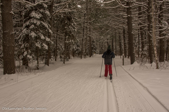 cross-country skiing in Arrowhead Provincial Park