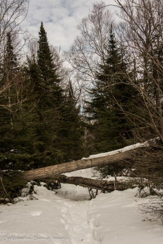 Kabeyun trail in Sleeping Giant provincial park in the winter
