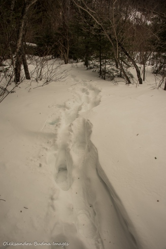 hiking at sleeping giant provincial park in the winter