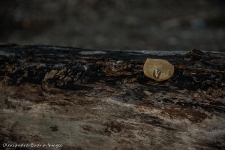 beautiful rock on a log