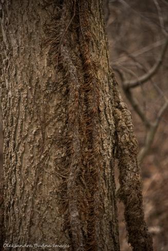 vine climbing a tree
