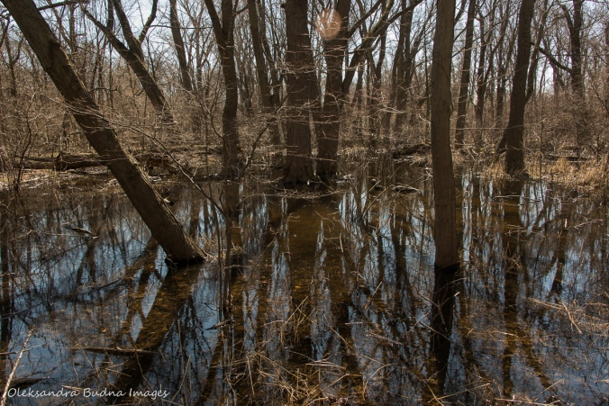 Poitn Pelee national park in the spring