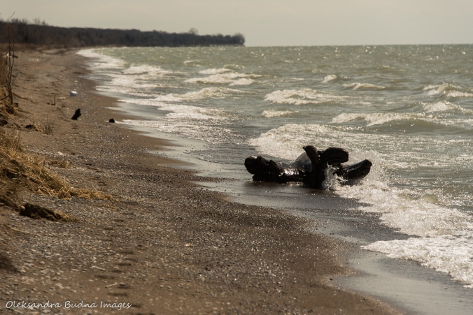 Lake Erie beach at Point Pelee