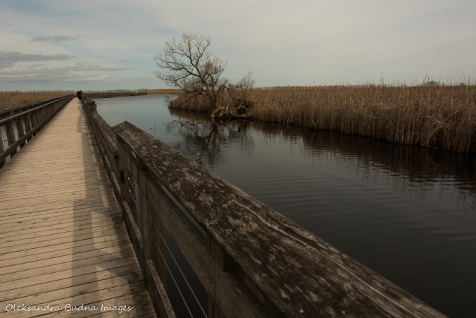 March boardwalk at Point Pelee