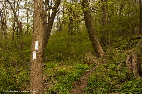 Bruce Trail in Hamilton