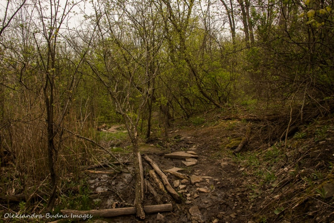 Bruce Trail in the spring