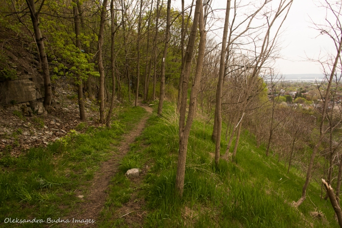 Bruce Trail in Hamilton