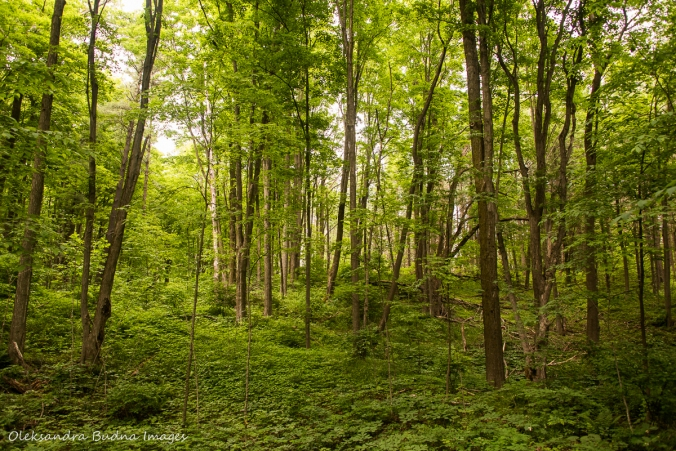 green forest in the spring at Hockley Valley Nature Reserve