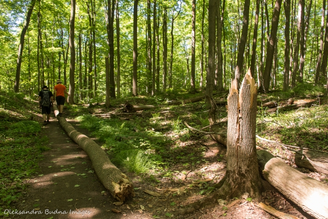walking over a log in the forest at Hockley Valley Nature Reserve