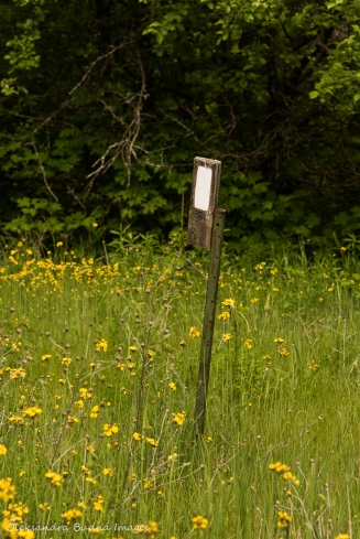 Bruce Trail marker at Hockley Valley Nature Reserve