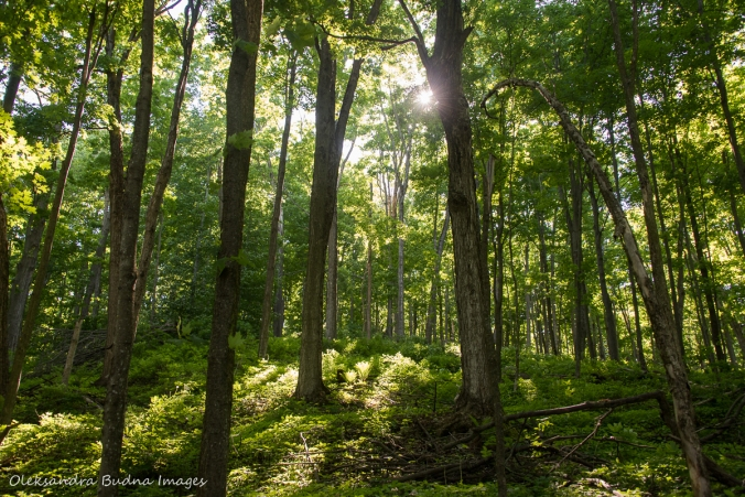 forest in the spring at Hockley Valley Nature Reserve
