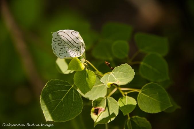 leaf with a maze