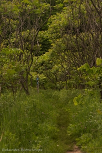 trail in Hockley Valley Nature Reserve