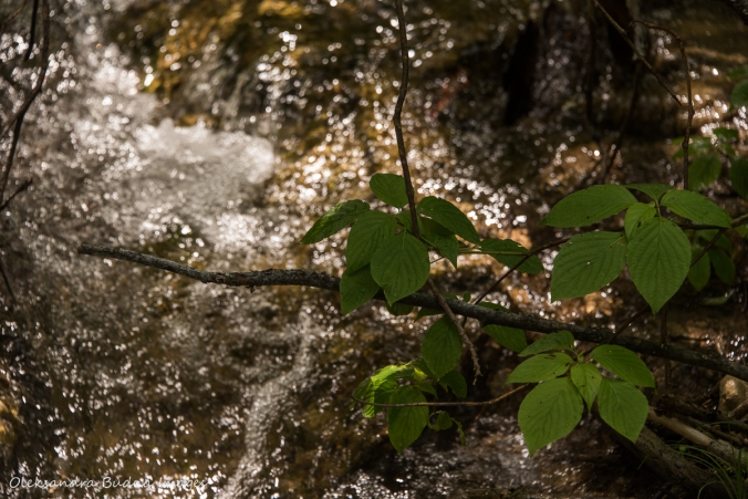 leaves over a stream in the forest