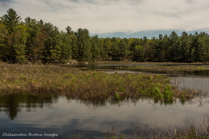 Crane Creek in Kawartha Highlands