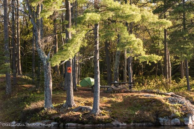 campsite 500 on Sparkler Lake in Kawartha Highlands
